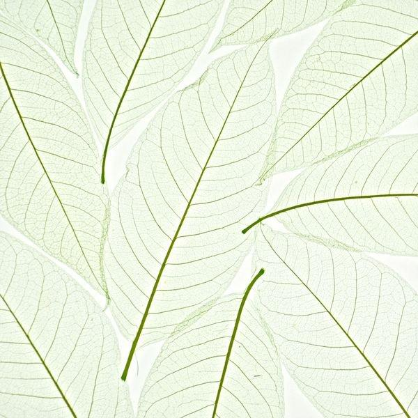 organic material resin panel Ochid leaf