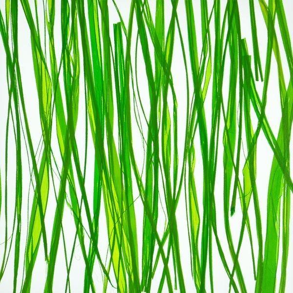 organic material resin panel Seaweed