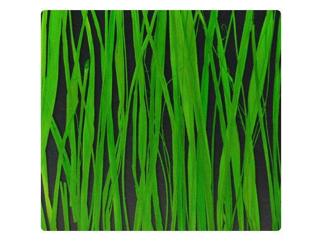 decorative translucent panels seaweed ochid grass harvest DECO-DECO