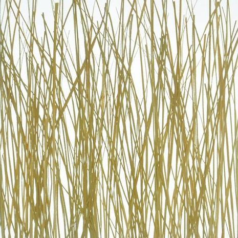 wood grass