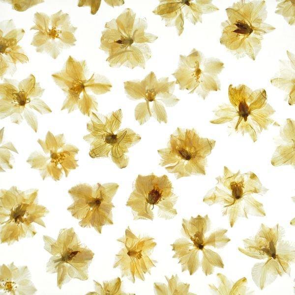 organic material resin panel Lily
